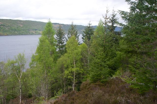 Schottland3 15