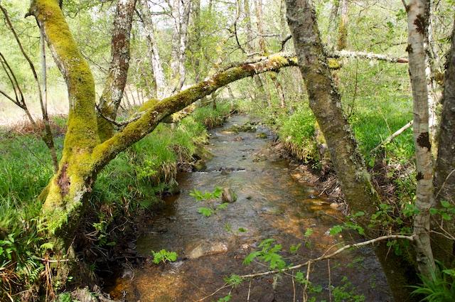 River Oich 1